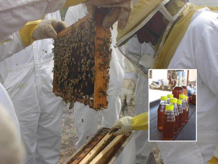 Binnenkort landelijke inventarisatie bijenteelt branche Suriname