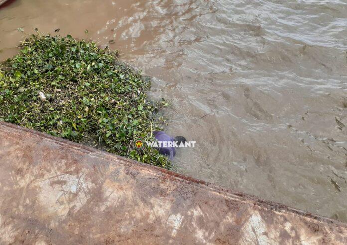 Lijk aangespoeld aan de over van de Surinamerivier