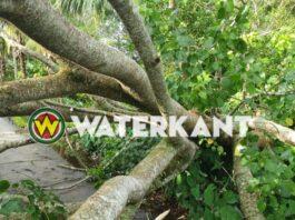 Schade door omvallen boom op wegdek