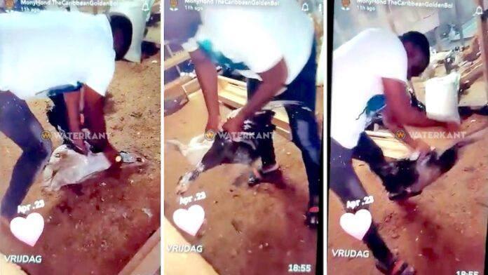 VIDEO: Afschuw over filmpje waarin Bordo eenden mishandelt