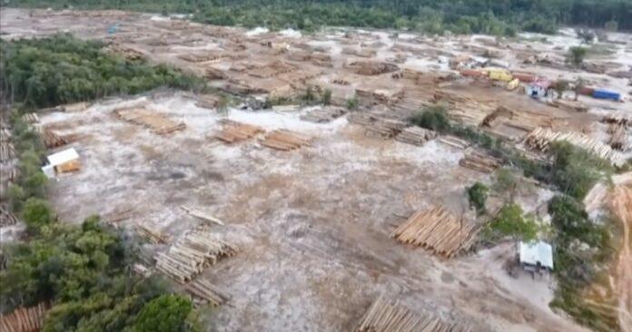 VIDEO: Illegaal hout is van Chinese exporteur; meerdere diensten betrokken