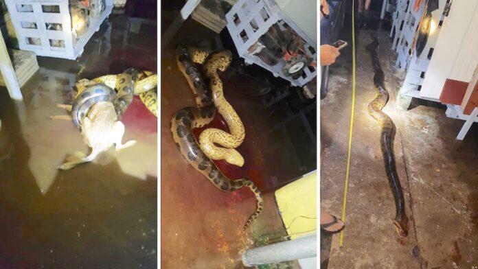 Hond overleeft aanval van grote slang
