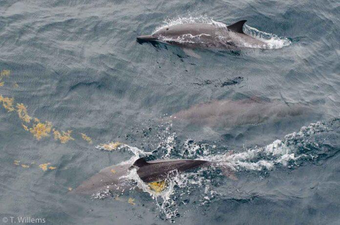 Oceaan Expeditie brengt diersoorten Surinaamse zee in kaart
