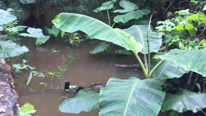 Tekort in voedselvoorziening als gevolg van wateroverlast