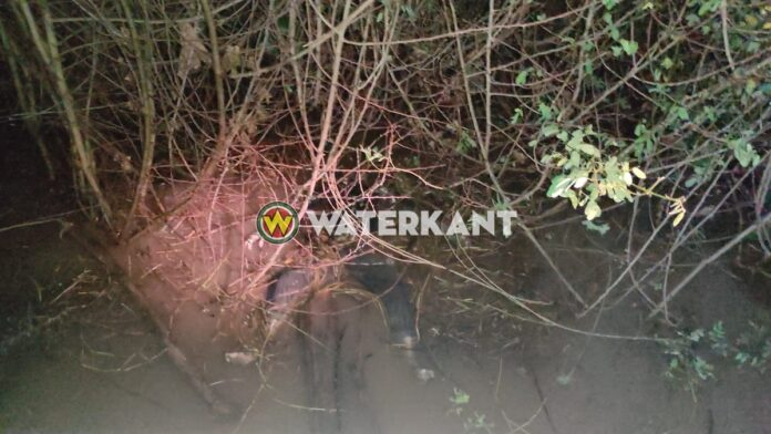Lichaam in water aangetroffen bij river resort