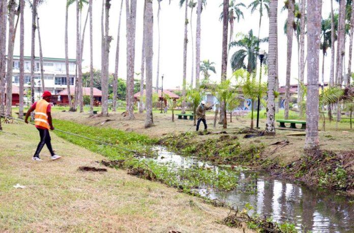 Structureel plan voor regelmatig onderhoud Palmentuin