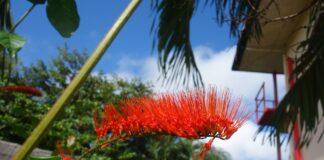 Ik vertrek... naar Suriname! door Peter Braxhoofden