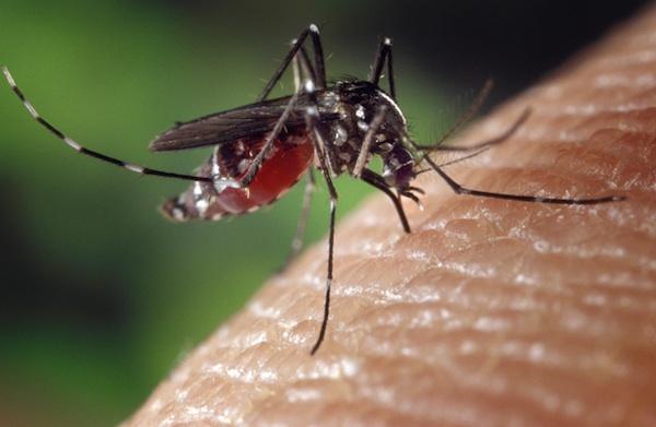 Nederlander besmet met gele koorts in Suriname